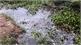 Bắc Giang: Cá chết nổi trắng trên sông Cầu