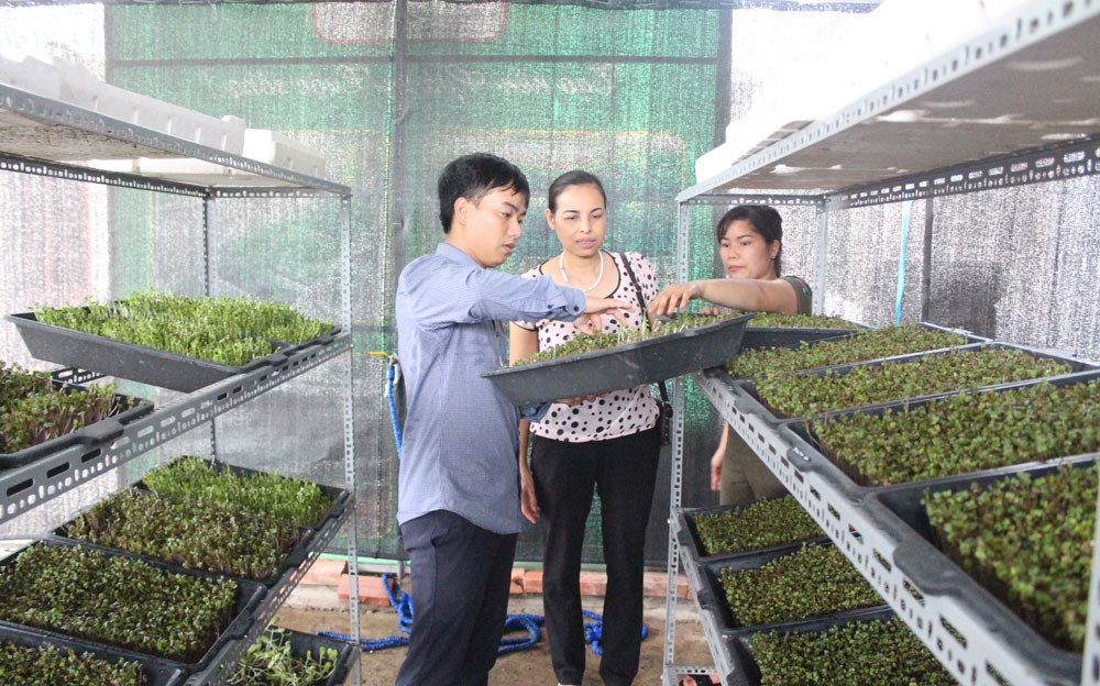 Many innovative models, Bac Giang province, dynamism and creativity, young scientists, agricultural development, initial efficiency, Caterpillar fungus, Smart Agriculture System