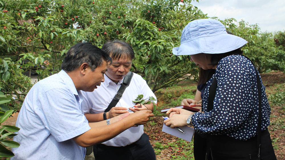 Building geological indication for lychee in Japan
