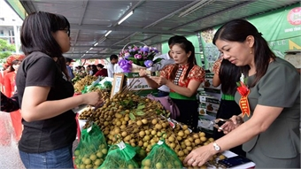 Longan promotion and safe farming week opens in Son La