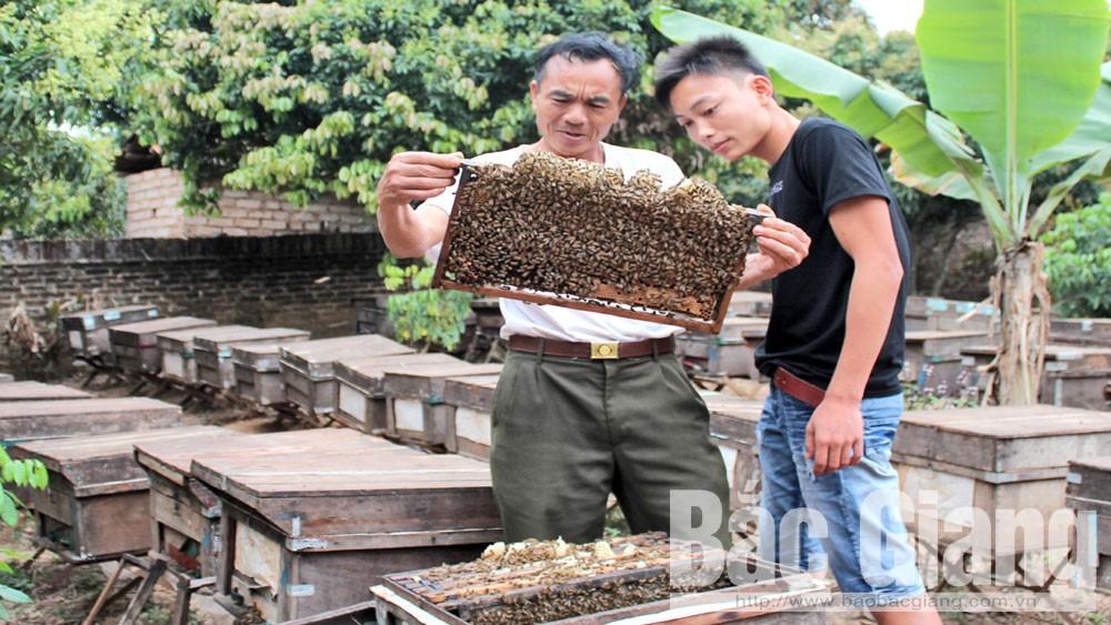 Hội viên Cựu chiến binh: Tăng thu nhập  từ kinh tế trang trại