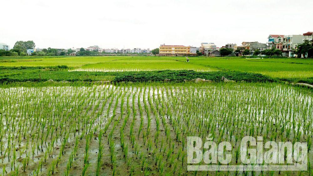Chủ động ứng phó với mưa bão, bảo vệ sản xuất nông nghiệp