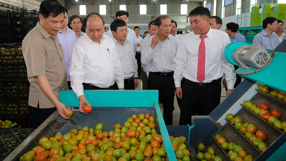 PM visits high-tech agricultural production model in Lam Dong