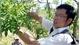 Ước vọng của tiến sĩ Dược học để người Việt có lá gan khỏe mạnh
