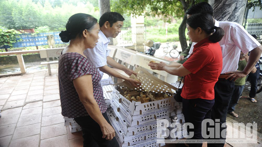 Bac Giang supports farmer in bio-safety chicken breeding