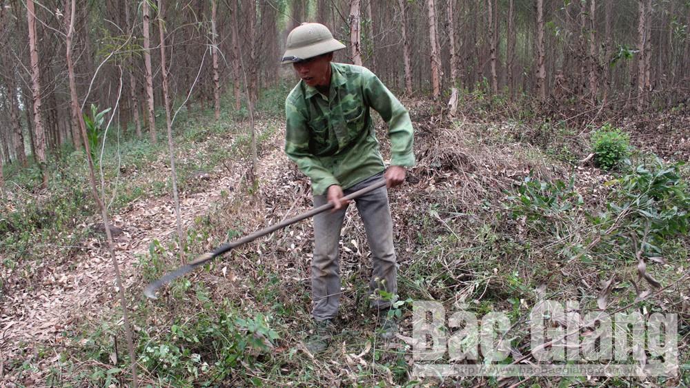 Lục Ngạn: 33 thôn xây dựng quy ước bảo vệ và phát triển rừng