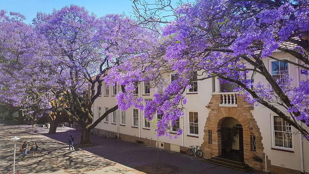 Mùa phượng tím Nam Phi
