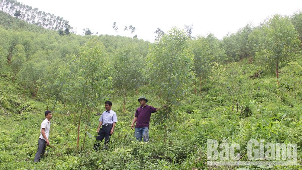 Cần giải quyết dứt điểm tranh chấp đất rừng