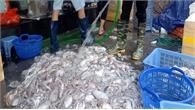 Phân biệt hải sản 'tắm' hóa chất