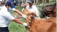 Xuất hiện vật nuôi nghi bị lở mồm long móng tại Bắc Giang