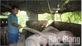 Ngành chăn nuôi phục hồi và phát triển trở lại
