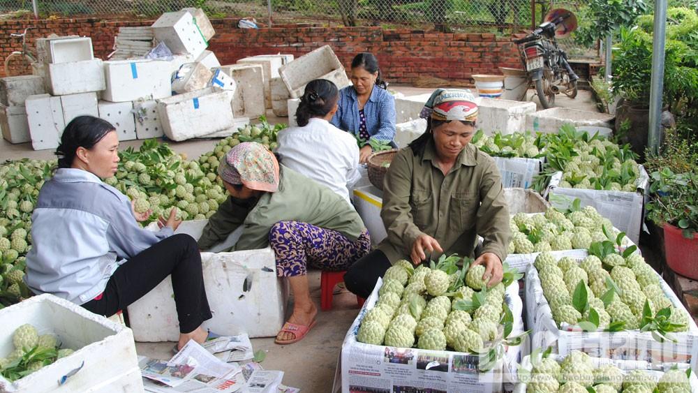 Lục Nam gia tăng giá trị sản phẩm đặc trưng