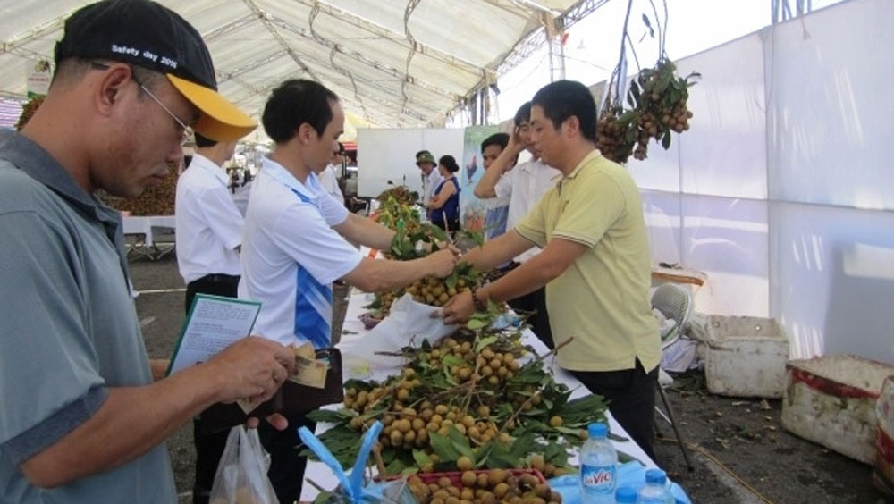 Hung Yen province, longan, Deputy PM,  cultivation of longan, trade promotion conference, farm produce, practical and basic solution, comprehensive way