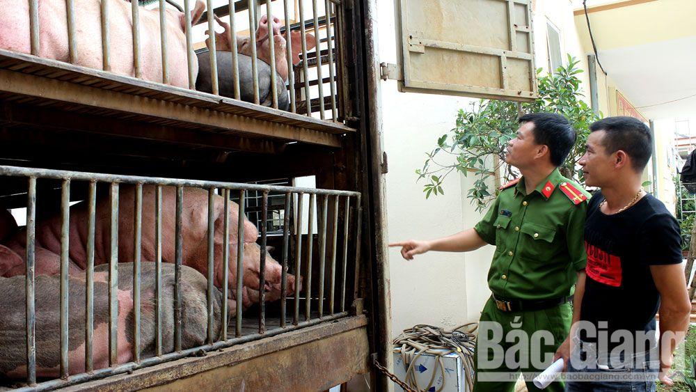 Công an huyện Sơn Động bắt giữ một xe tải chở lợn không rõ nguồn gốc