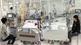 2 người chết, 3 người nguy kịch vì bị ong vò vẽ tấn công