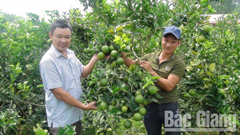Yên Thế: Giá trị sản xuất từ cây ăn quả đạt hơn 170 tỷ đồng