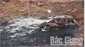Sơn Động: Công ty chăn nuôi lợn xả thải gây ô nhiễm môi trường