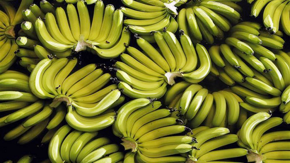 Hoang Anh Gia Lai to expand banana farming for China export