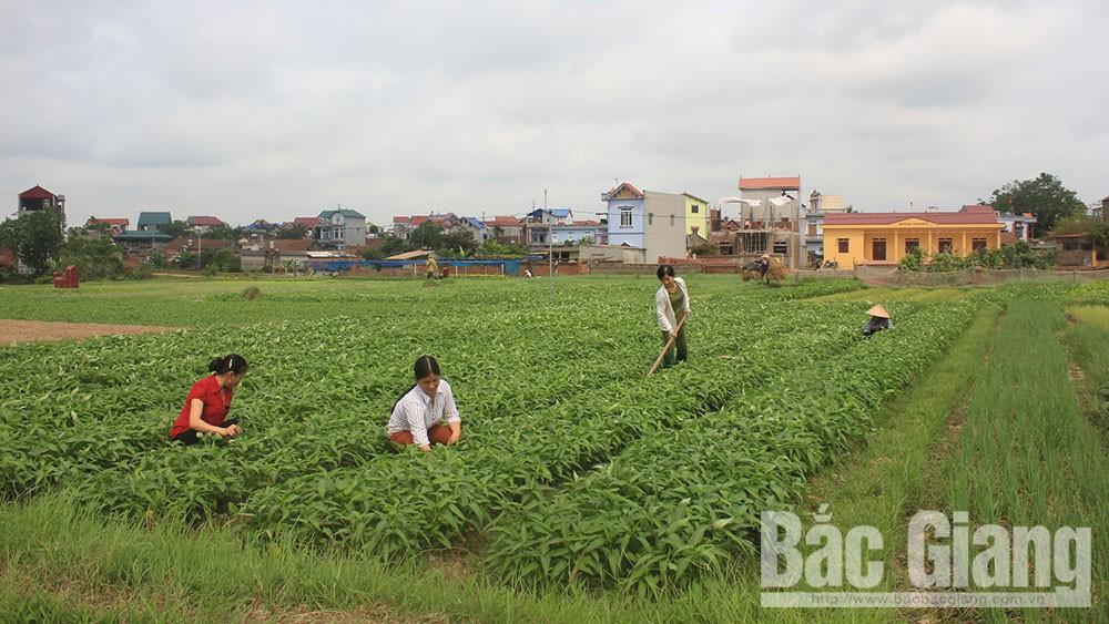 Phụ nữ Bắc Giang khởi nghiệp từ sản xuất, kinh doanh nông sản