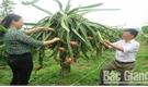 Nông dân Ngô Xuân Loan trồng thanh long làm giàu