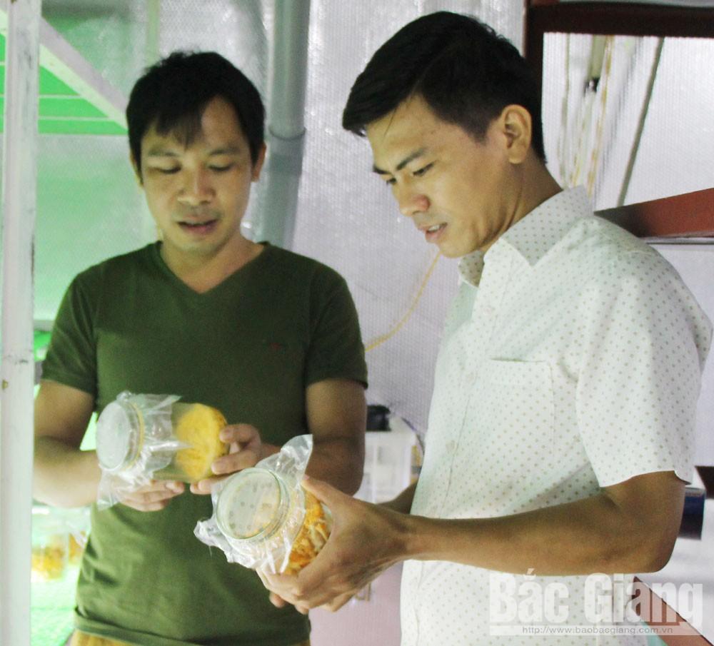 Anh Lương Văn Tú (bên trái) giới thiệu đông trùng hạ thảo nuôi trong nhà lạnh.