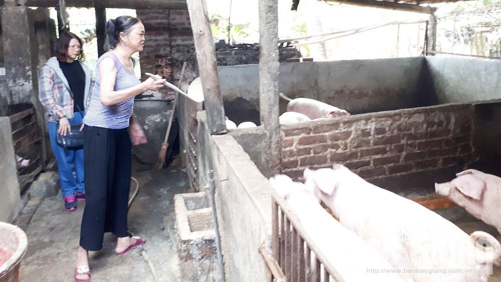 Chăn nuôi trong khu đô thị gây ô nhiễm môi trường