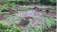 Mưa lũ gây nhiều thiệt hại về người và tài sản tại các địa phương
