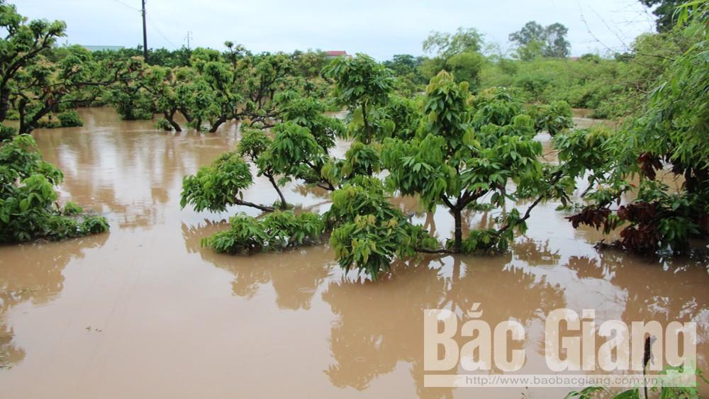 Bắc Giang có hơn 2 nghìn ha cây trồng bị ngập
