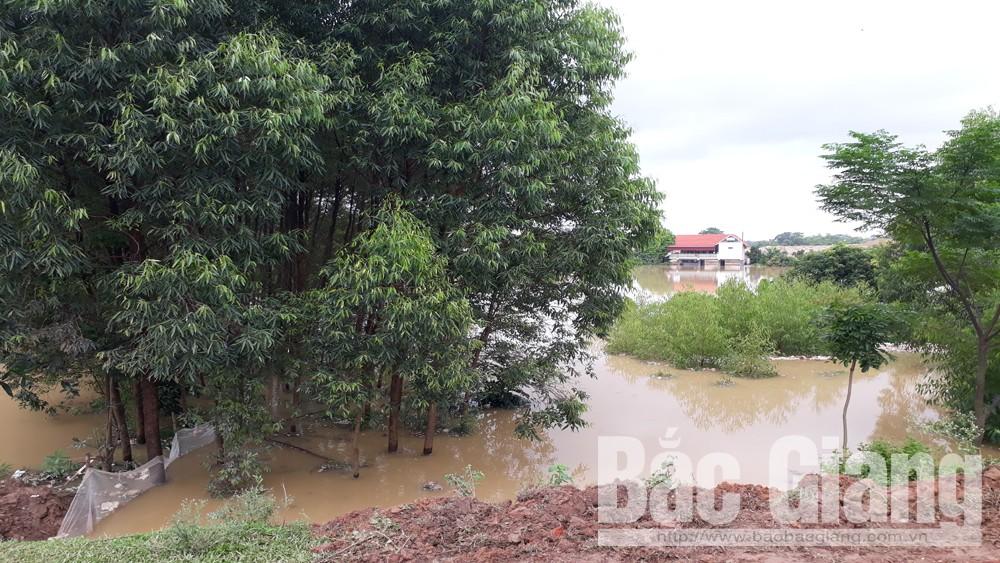 Hơn 100 ha nuôi trồng thủy sản bị ngập do mưa lũ