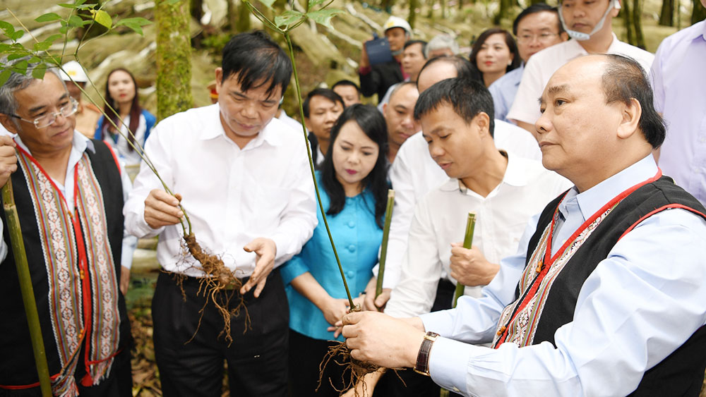 PM: Ngoc Linh ginseng should be competitive with global brands