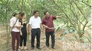 Bắc Giang nâng cao trình độ đội ngũ bí thư cấp ủy cơ sở