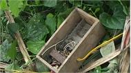 Lục Nam: Bẫy chuột, chết người