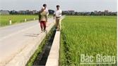 Tu bổ kênh tiêu nội đồng: Ưu tiên những cánh đồng lớn
