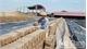Giá gạch nung ở Bắc Giang giảm, chủ lò lỗ nặng
