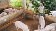 Không chủ quan với dịch tả lợn châu Phi