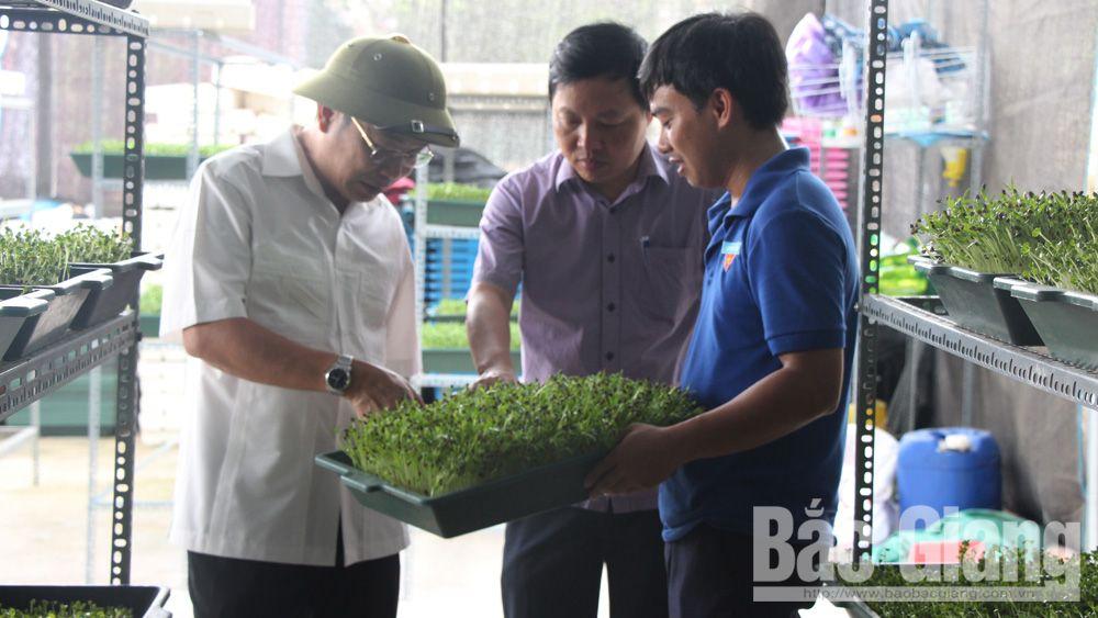 Tìm hướng liên kết, tiêu thụ, sản phẩm nông nghiệp sạch, Báo Bắc Giang, Bắc Giang