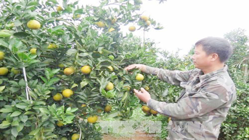 Hoa Binh promotes local fruit, farm produce