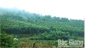 Diện tích trồng rừng tăng gần 152 ha