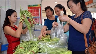 Production of clean agricultural products remains insignificant