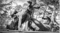 Vì sao Hồng quân Liên Xô phải dùng chó cảm tử để tấn công xe tăng Đức?