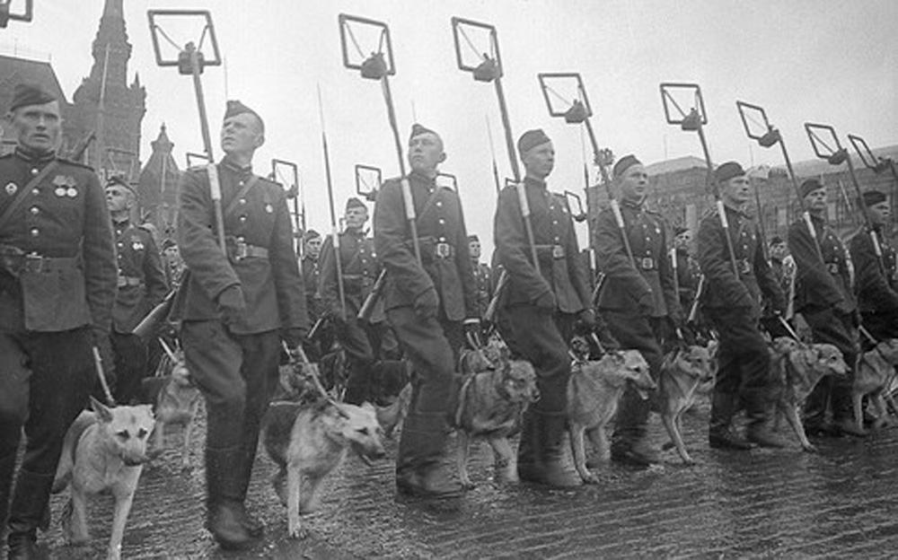 Hồng quân Liên Xô, Nga, liên Xô, chó cảm tử, tấn công xe tăng Đức, phát xít Đức, chiến công