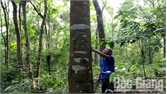 Thành lập 14 đội cựu chiến binh bảo vệ rừng