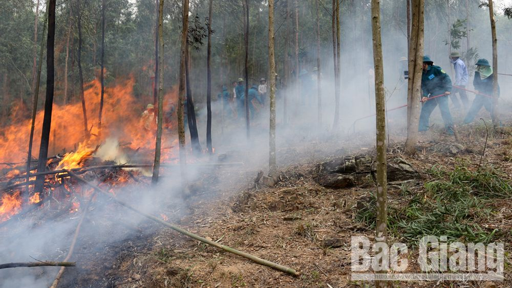 Diễn tập phòng cháy, chữa cháy rừng