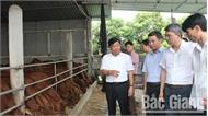 Quan tâm tháo gỡ khó khăn, hỗ trợ HTX sản xuất nông nghiệp ứng dụng công nghệ cao