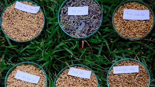 Người làm nông nghiệp hữu cơ mong tiếp cận nguồn gen quý
