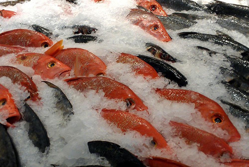 Cá chết, cá tươi đông lạnh, cá ươn, cá ướp urê