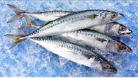 Lựa chọn cá đông lạnh