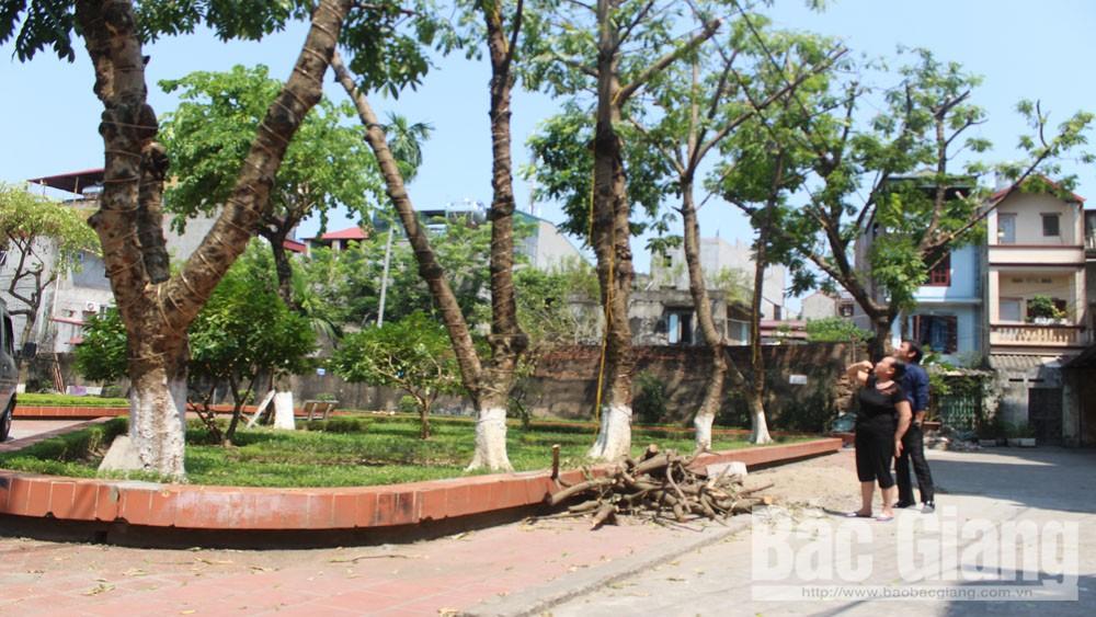 TP Bắc Giang: Cắt, tỉa nhiều cây xanh chưa phù hợp
