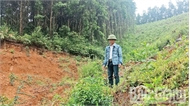 Trồng rừng thất thu vì cây giống kém chất lượng