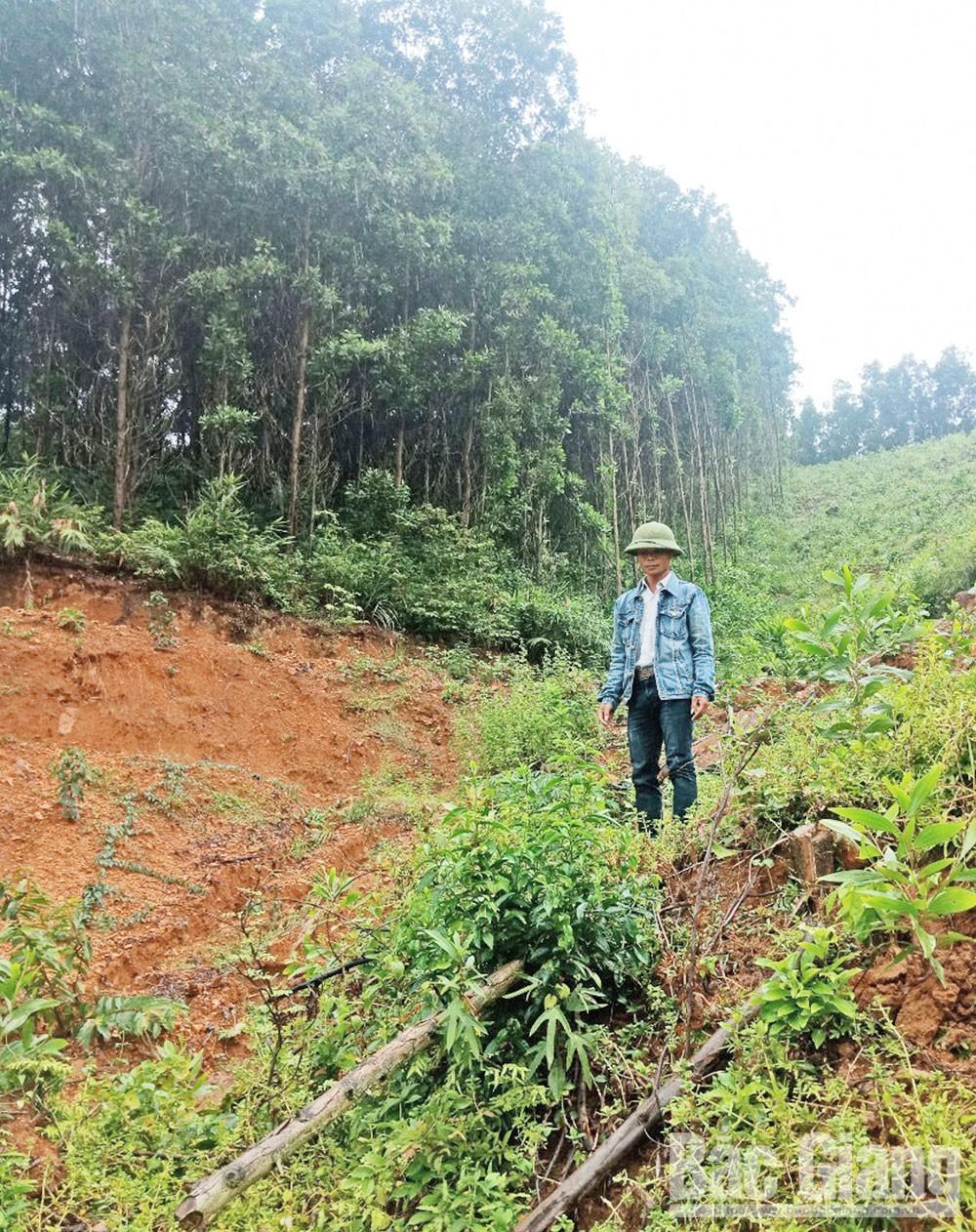 Bắc Giang, trồng rừng, giống cây, chất lượng, sản xuất